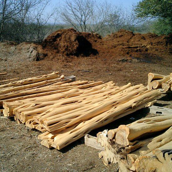 Pile of Peeled Cedar Timber