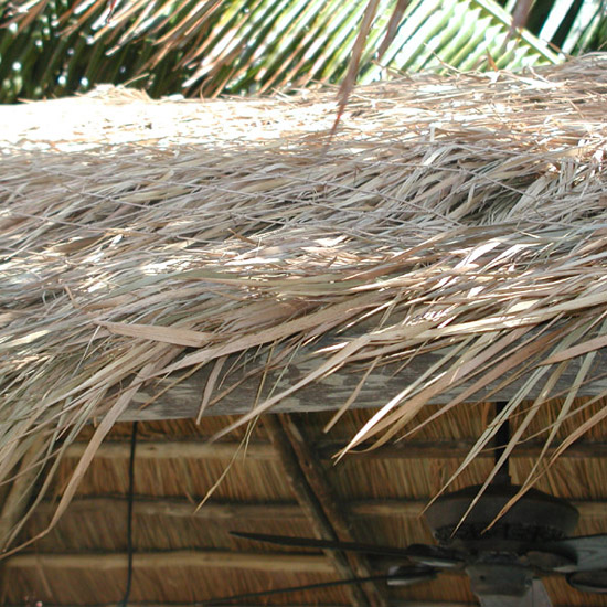 Palm Thatch Roof Close Up